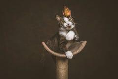 Gato de gato malhado novo brincalhão alerta com a caixa branca que senta-se em riscar o cargo contra o fundo escuro da tela Fotos de Stock