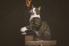 Gato de gato malhado novo brincalhão alerta com a caixa branca que senta-se em riscar o cargo contra o fundo escuro da tela Imagem de Stock Royalty Free