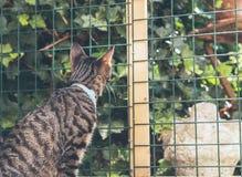 Gato de gato malhado novo curioso que olha através da cerca no jardim Foto de Stock