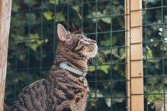 Gato de gato malhado novo curioso que olha através da cerca no jardim Imagens de Stock Royalty Free
