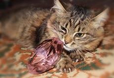 Gato de gato malhado pensativo Foto de Stock Royalty Free