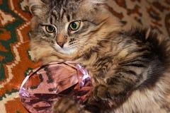 Gato de gato malhado pensativo Foto de Stock