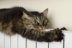Gato de gato malhado que encontra-se um radiador morno Imagem de Stock Royalty Free