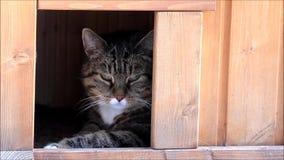 Gato de gato malhado que relaxa em uma casa do gato vídeos de arquivo