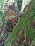 Gato de gato malhado que senta-se na árvore musgoso e no olhar ao redor