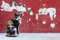 Gato de gato malhado que senta-se no fundo vermelho da parede da quebra Fotos de Stock Royalty Free