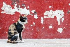 Gato de gato malhado que senta-se no fundo vermelho da parede da quebra Imagens de Stock Royalty Free