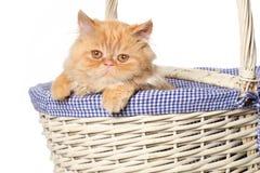 Gato de Ginger Persian en una cesta Foto de archivo