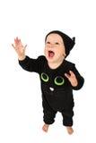 Gato de Halloween Fotografia de Stock
