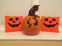 Gato de Halloween fotografía de archivo