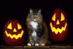 Gato de Halloween con las Jack-O-linternas Imagenes de archivo