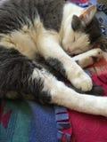 Gato de la abrazo Fotografía de archivo