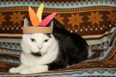 Gato de la acción de gracias Imagen de archivo libre de regalías