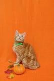 Gato de la acción de gracias Imagen de archivo