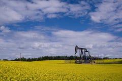 Gato de la bomba del pozo de petróleo en f amarilla Fotografía de archivo