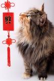 Gato de la buena fortuna. foto de archivo libre de regalías