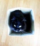 Gato de la caja Imagenes de archivo