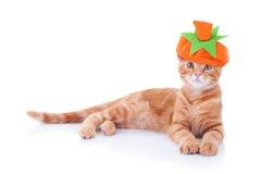 Gato de la calabaza de Halloween de la acción de gracias Fotografía de archivo