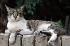 Gato de la calle Imágenes de archivo libres de regalías