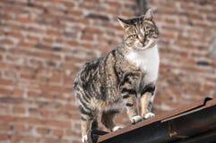 Gato de la calle Imagen de archivo
