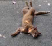 Gato de la calle Foto de archivo libre de regalías