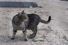 Gato de la calle Imagen de archivo libre de regalías