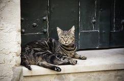 Gato de la calle de la ciudad fotografía de archivo libre de regalías