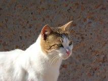 Gato de la calle con ojos verdes y un bigote de la afiladura Foto de archivo