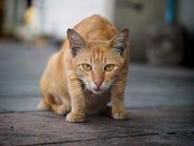 Gato de la calle de Bangkok Imagen de archivo libre de regalías