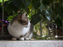 Gato de la calle delante de una cerca con las hojas Fotos de archivo libres de regalías