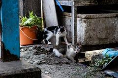 Gato de la calle en ciudad grande Imagen de archivo libre de regalías