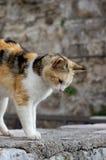 Gato de la calle en ciudad vieja imagen de archivo