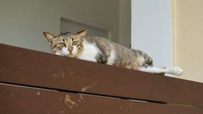 Gato de la calle en el estante de madera Fotografía de archivo