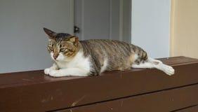 Gato de la calle en el estante de madera Imagenes de archivo