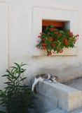 Gato de la calle en Pican Imagen de archivo