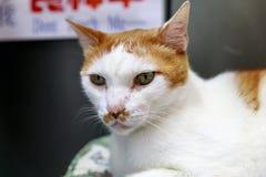 Gato de la calle en Taiwán fotografía de archivo