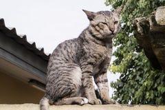 Gato de la calle en una pared Imágenes de archivo libres de regalías