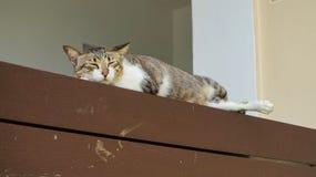 Gato de la calle que duerme en el estante de madera Fotografía de archivo