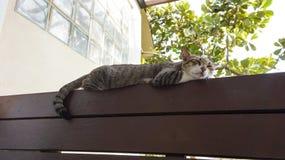 Gato de la calle que duerme en el estante de madera Fotos de archivo libres de regalías