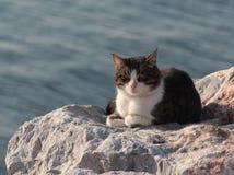 Gato de la calle que toma el sunbath en la roca Fotos de archivo libres de regalías