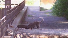 Gato de la calle Un gato que vive en la calle, 4k almacen de metraje de vídeo