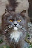Gato de la caza Fotos de archivo