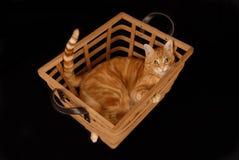 Gato de la cesta Imagenes de archivo