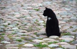 Gato de la ciudad Imagen de archivo libre de regalías