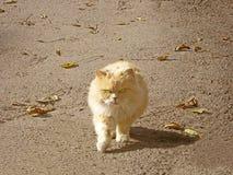 Gato de la ciudad Fotografía de archivo