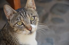 Gato de la ciudad Fotografía de archivo libre de regalías