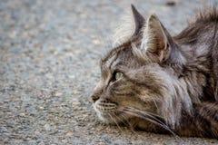 Gato de la ciudad en descanso fingido en el hormigón Fotografía de archivo