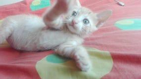 Gato de la empanada de Cutie Foto de archivo libre de regalías