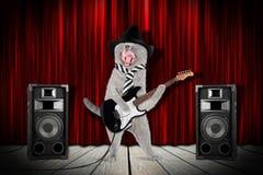 Gato de la estrella del rock Fotografía de archivo