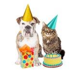 Gato de la fiesta de cumpleaños y sombreros que llevan del perro Fotos de archivo libres de regalías
